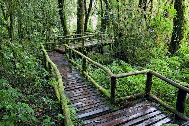 A trilha natural na floresta tropical.