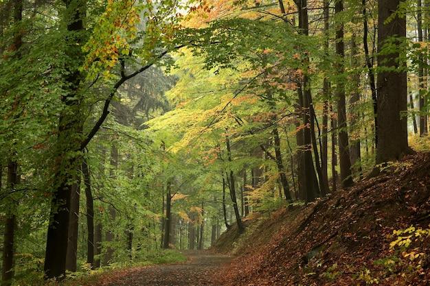 A trilha pela floresta outonal