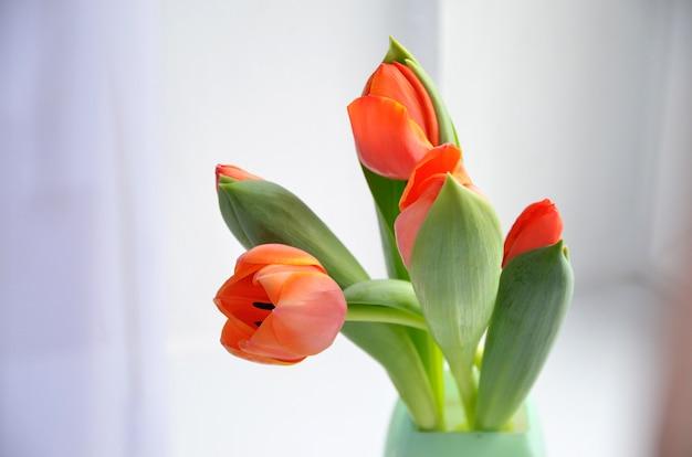 A tulipa colorida floresce o fundo, flores borradas.