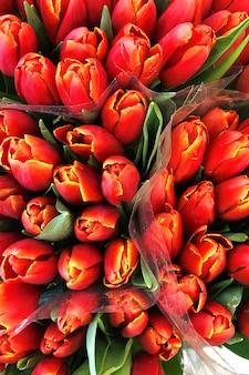 A tulipa de florescência vermelha floresce à venda no florista. vista do topo.