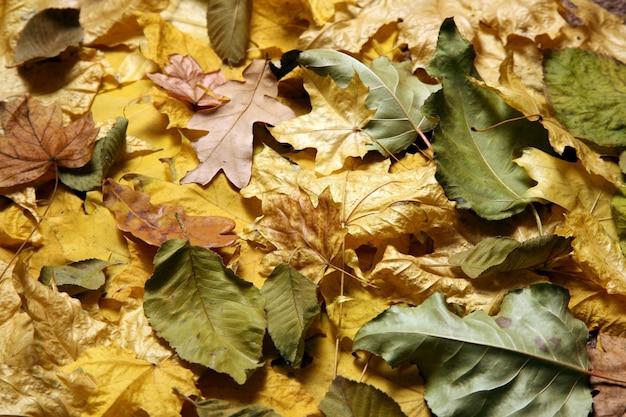 A variedade de folhas caídas no outono de perto