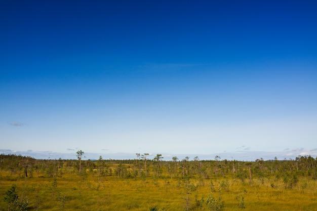 A vegetação de verão na tundra montanhosa, península de kola, rússia