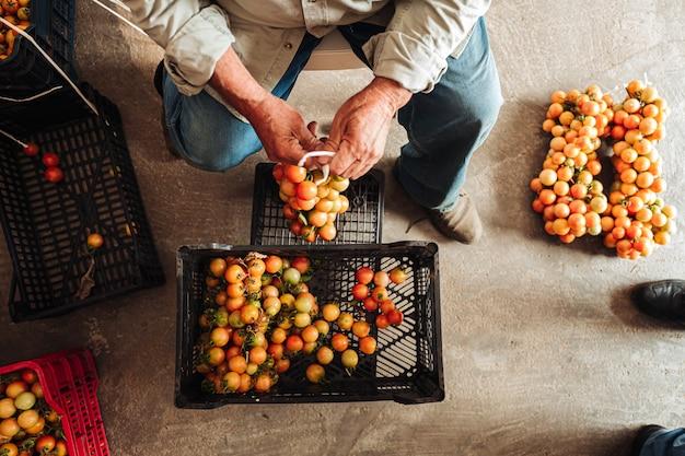 A velha tradição de pendurar tomates cereja na parede para preservá-los
