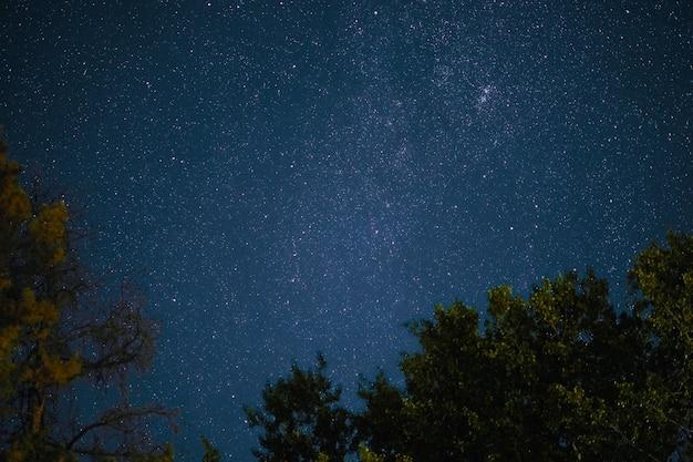 A via láctea se ergue sobre os pinheiros em uma noite estrelada sobre a floresta