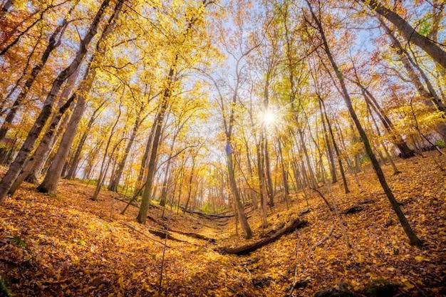 A visão do worm de um raio de sol por entre as árvores de outono na encosta de uma montanha