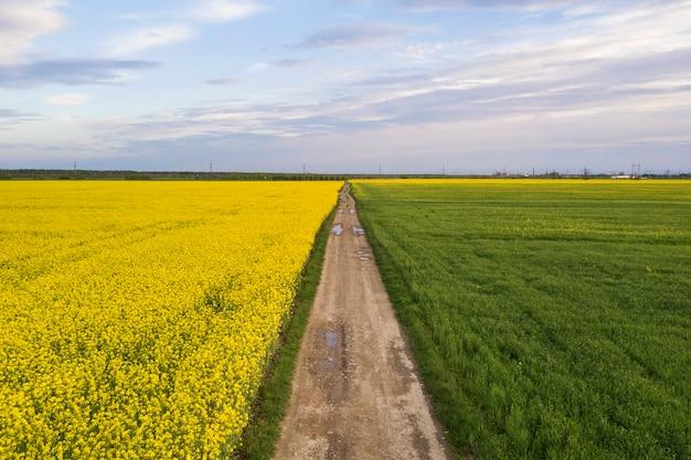A vista aérea da estrada à terra reta com as poças de chuva em campos verdes com as plantas de florescência da colza no fundo do espaço da cópia do céu azul. fotografia de zangão.
