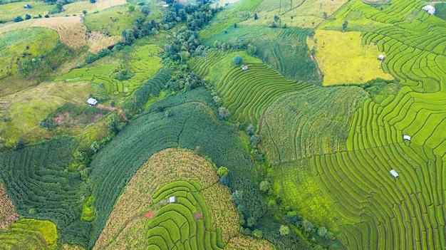A vista aérea dos campos verdes do arroz com terraço ajardina o teste padrão diferente na manhã no norte da tailândia
