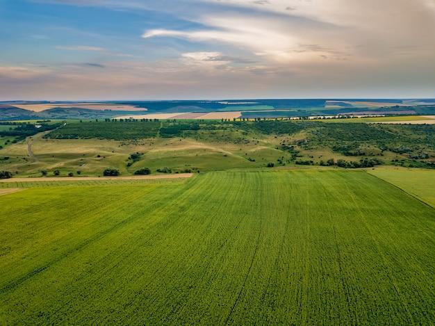 A vista aérea sobre girassóis amarelos desabrocham campo com céu azul sem nuvens.