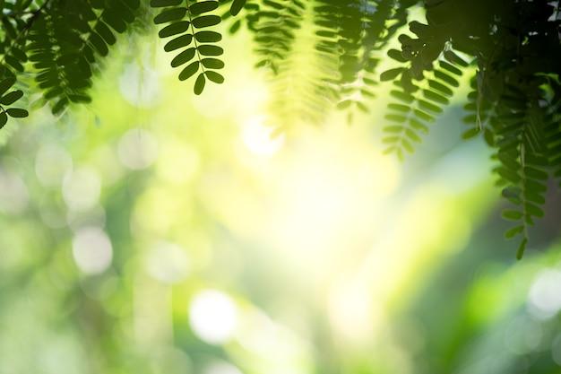 A vista bonita do close up da folha verde da natureza nas hortaliças borrou o fundo com espaço da luz solar e da cópia. é usado para o fundo de verão ecologia natural e o conceito de papel de parede fresco.