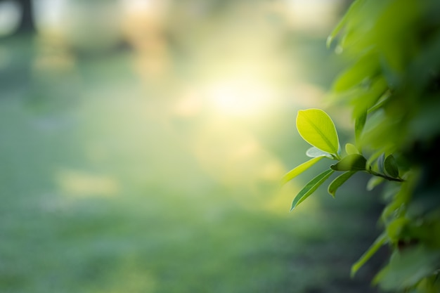 A vista bonita do close up do verde da natureza sae no fundo borrado da árvore das hortaliças com o parque do jardim da luz solar em público.
