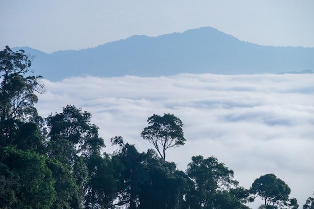 A vista da névoa cobriu a montanha no distrito de aiyoeweng, tailândia do sul, com as árvores.