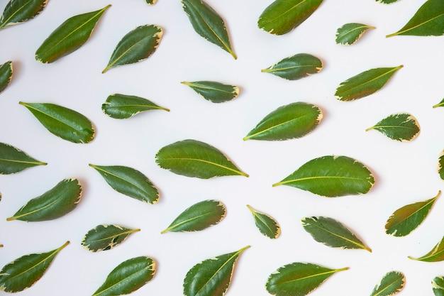 A vista superior isolou o teste padrão das folhas do verde no fundo branco.