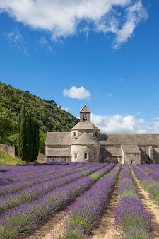 Abadia de senanque à luz do verão. gordes, luberon, vaucluse, provence, frança, europa.