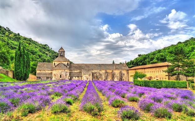 Abadia de senanque, um importante destino turístico em vaucluse - provence, frança