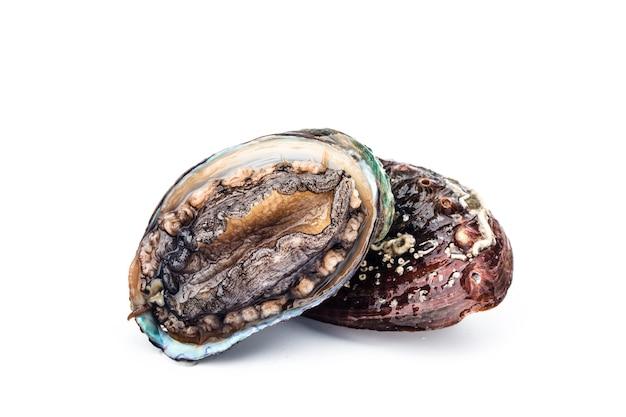 Abalones crus em branco
