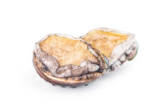 Abalones crus no fundo branco
