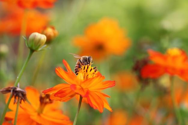 Abelha e flor