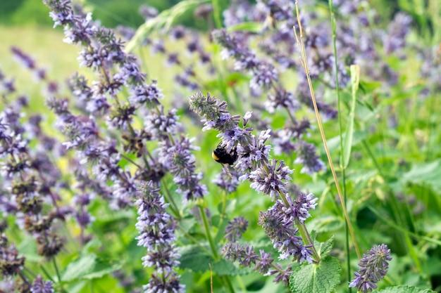 Abelha em uma flor bonita do prado