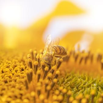 Abelha em uma flor de girassol.