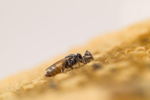 Abelha macro e natureza em favo de mel