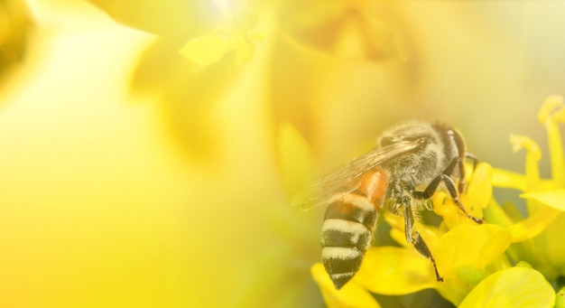 Abelha na flor amarela