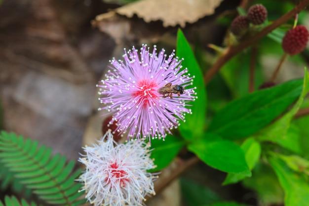 Abelha sentada na flor selvagem