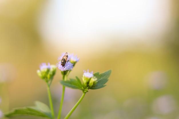 Abelha voando ao redor do cluster de luz roxas flores