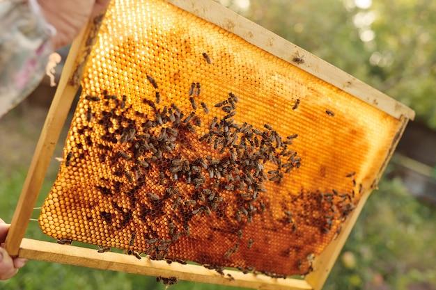 Abelhas close-up em um quadro de abelhas em uma clarabóia contra uma luz de fundo da luz solar