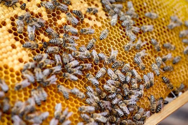 Abelhas em estrutura de favo de mel. molduras de favo de mel para venda