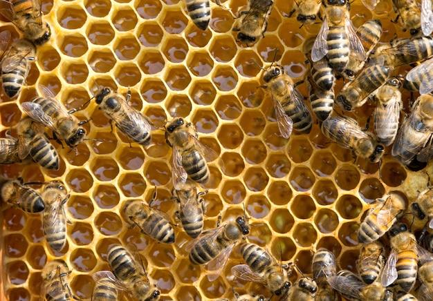 Abelhas em honeycells