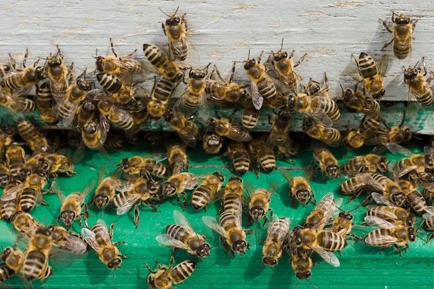 Abelhas em madeira