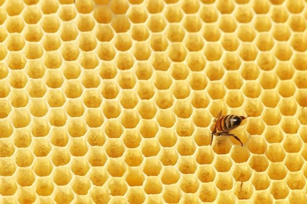 Abelhas em um favo de mel