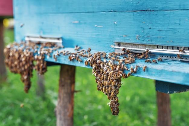 Abelhas entrando na colmeia família de abelhas na entrada da colmeia home apiário foco seletivo