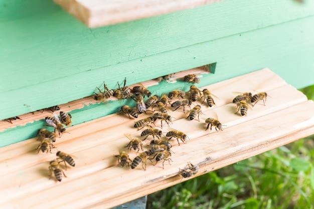 Abelhas na antiga entrada da colméia. abelhas retornando da coleção de mel para colméia amarela