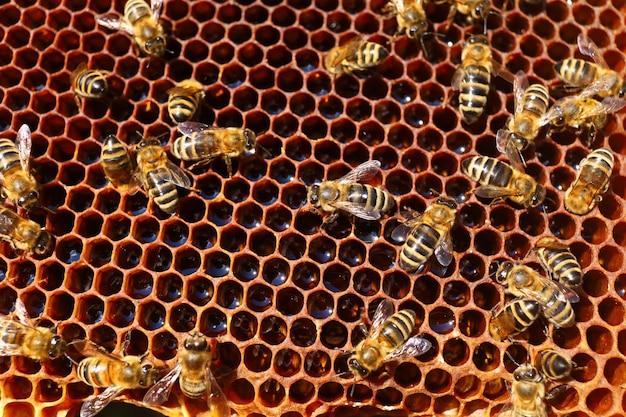 Abelhas na colmeia no apiário e close-up do favo de mel