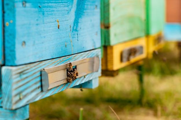 Abelhas no favo de mel no apiário no verão.