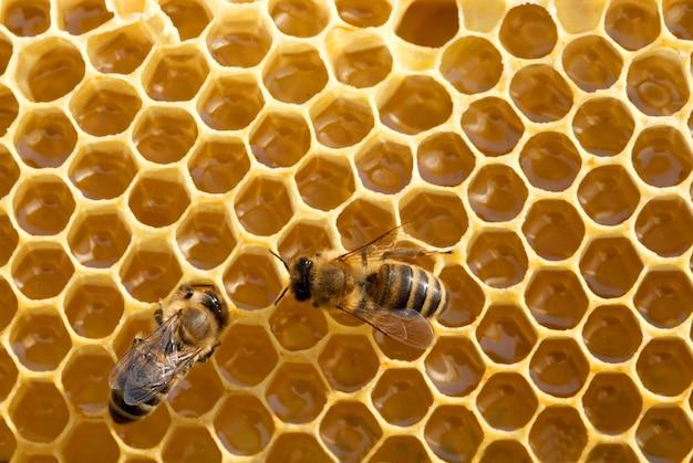 Abelhas no fundo de células de mel