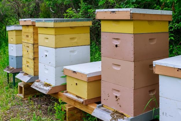 Abelhas voando perto da fazenda colméia trabalhando em abelhas