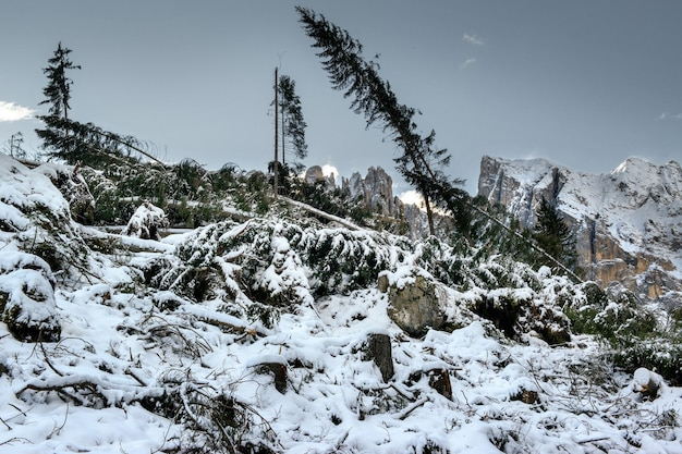 Abetos caídos no chão coberto de neve cercado por altos penhascos rochosos nas dolomitas