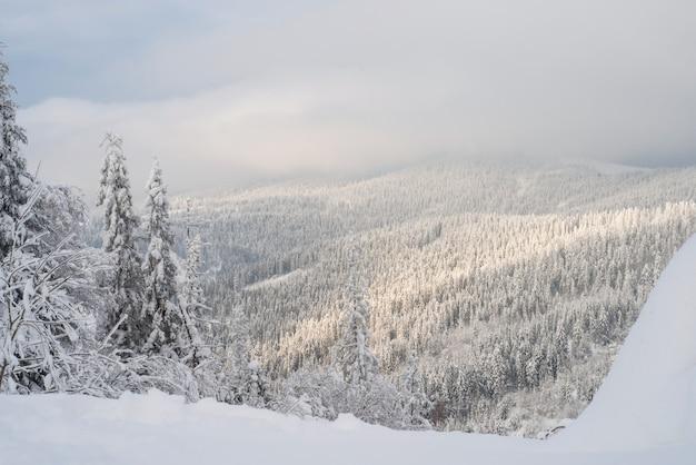 Abetos cobertos de neve do inverno nas montanhas no céu azul com sol