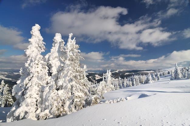 Abetos cobertos de neve, fundo de paisagem de inverno