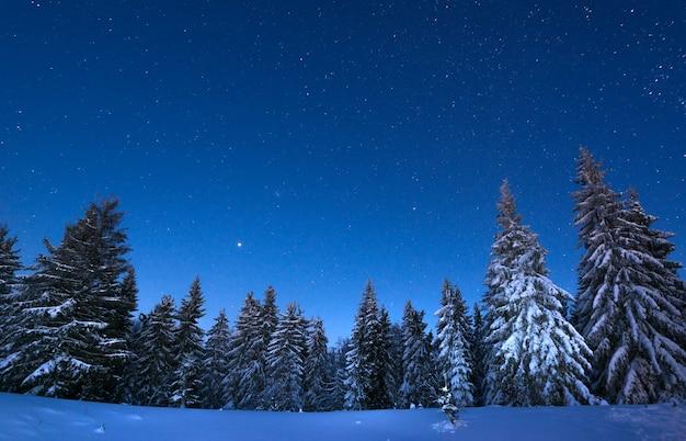 Abetos nevados de paisagem noturna hipnotizante crescem entre montes de neve contra o pano de fundo de cadeias não montanhosas e um céu estrelado