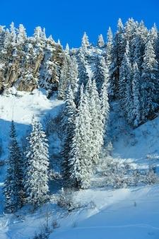 Abetos nevados na encosta da rocha. cenário de inverno.