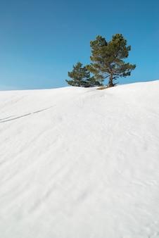 Abetos verdes nas montanhas nevadas.