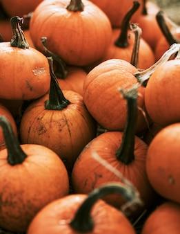 Abóbora de halloween em clima sombrio de outono
