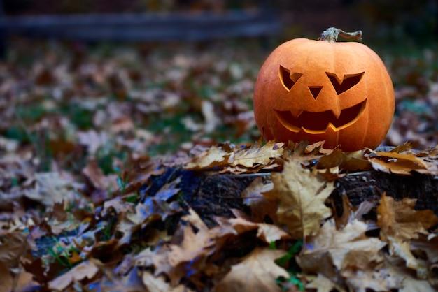 Abóbora de halloween na floresta do outono,