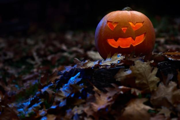 Abóbora de halloween sentado na floresta de outono entre caído