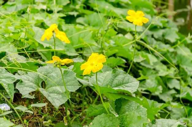 Abóbora e flor: foco suave