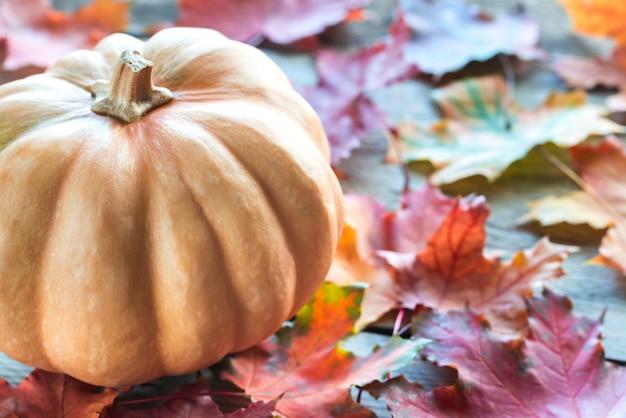 Abóbora em folhas de outono