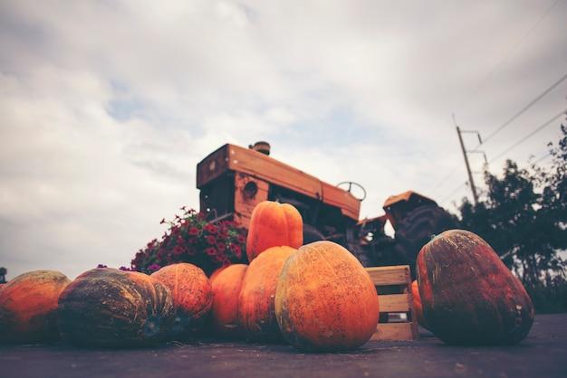 Abóbora gigante cultivada de sistemas agrícolas industriais modernos